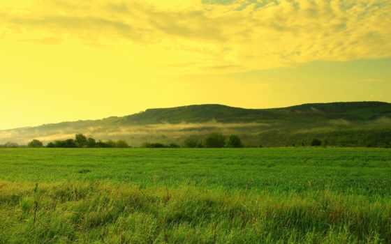 поле, трава, trees, небо, холмы, oblaka, дымка, лес, травы, landscape, природа,