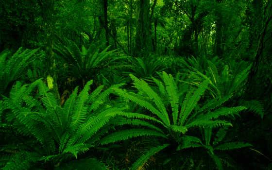 new, zealand, лес