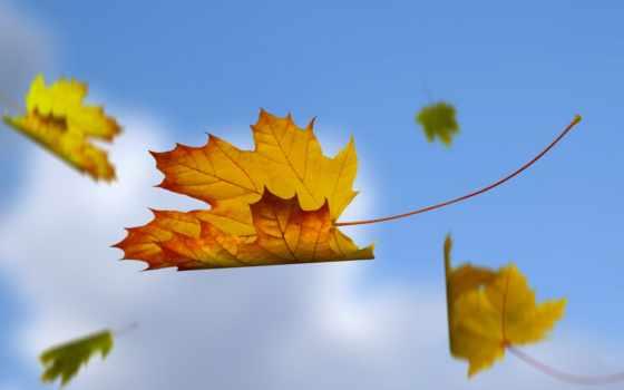 leaf, пасть, amazing, июнь, sensei,