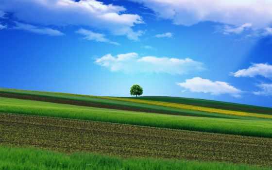 дерево, landscape, трава, поле, тег, есть, вышивка, всех, которых,