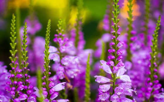 cvety, полевые, названия, цветов, красные, яркие, стебли, луговые,