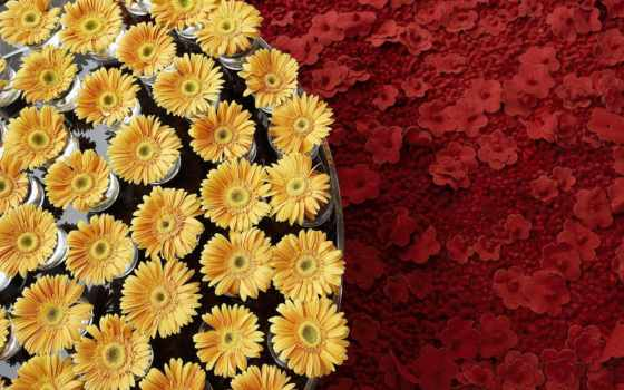 martha, цветы, цветов
