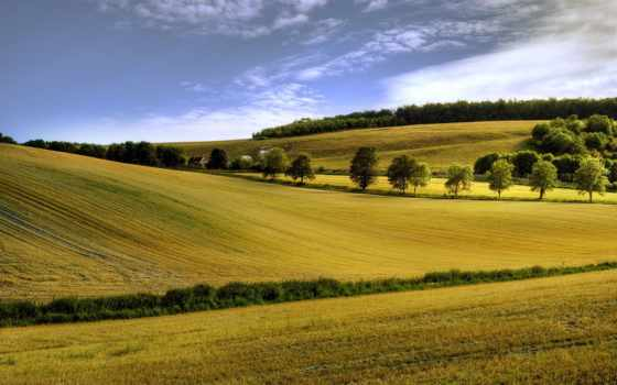 landscape, поле, summer