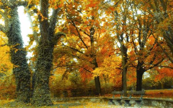 пейзажи -, park, landscape, качественные, осень, trees, лавочки,