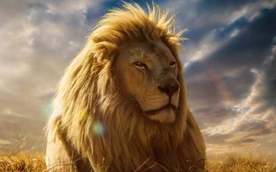 lion, зверей, king, хищник, full,