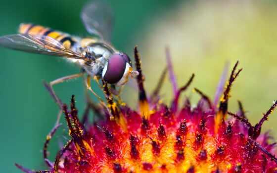 shall, preserve, lord, пчела, злой, насекомое, makryi, priroda, животное