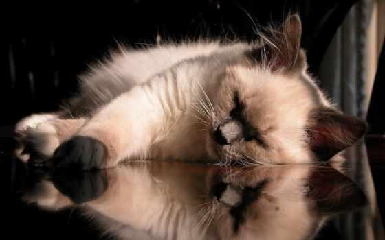 обои, животные, кошка, спит, микс, креативные, сов