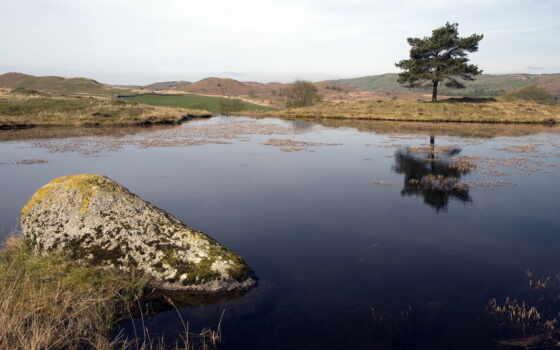 озеро, дерево Фон № 24932 разрешение 1920x1080