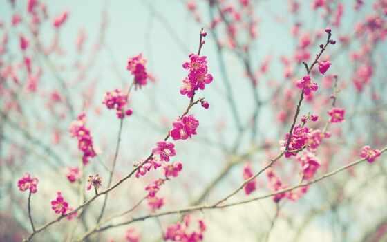 цветки, весна, ветви