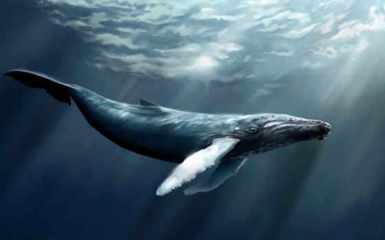 кит, море, sperm