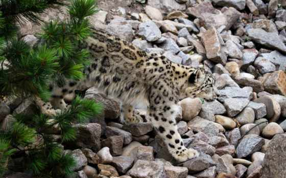 zhivotnye, камни, кошки