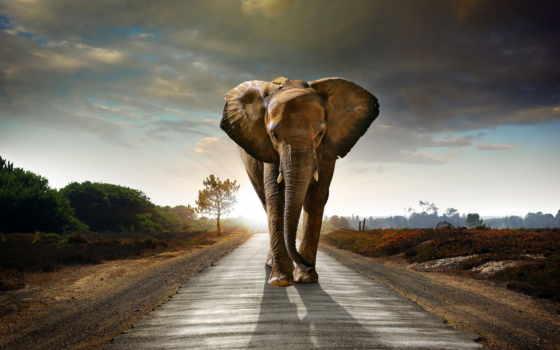 сонник, чему, слон