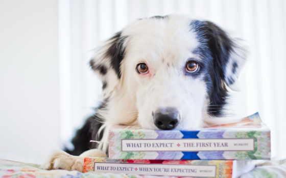 книги, собака, книга