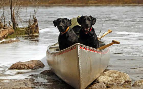 собаки, postcard, лодке