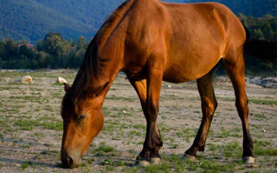 лошадь, red, фон, eating,