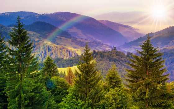 landscape, pine, trees, гора, близко, лес, stock, hillside, долина,