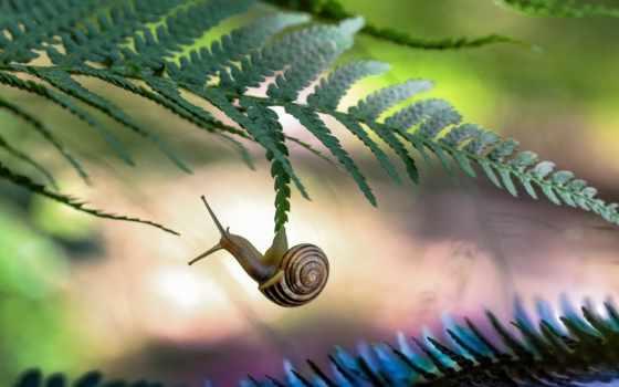 zhivotnye, snail, животных, природа, макро, трава, sun,