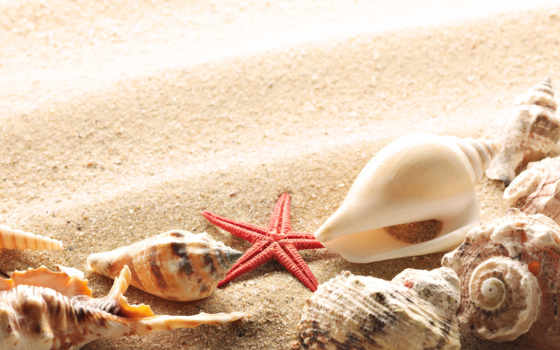 фотообои, яndex, коллекциях, summer, коллекцию, коллекции, купить, море, посмотрите, песок,