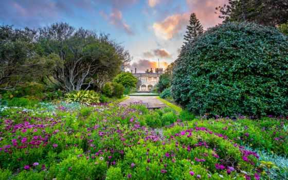 garden, botanical, sydney, австралия, природа, royal, парки, растение, высокого, качества,