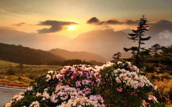 красивые, горы, cvety