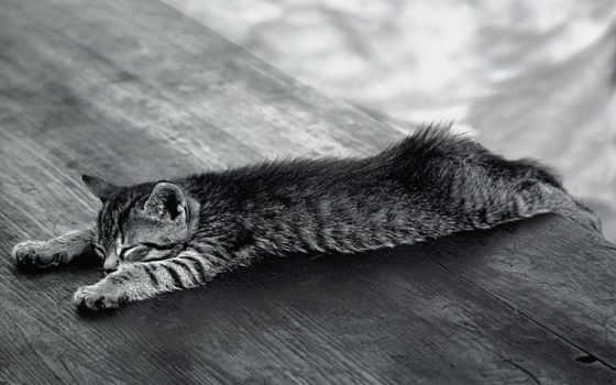 чёрно, котенок, белые