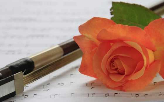 коллекция, роза, цветы