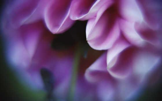 цветы, бутоны, лепестки