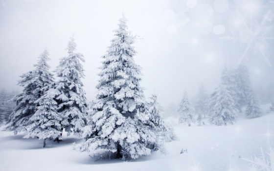 winter, снег, природа, елки, trees, широкоформатные, landscape, года, time,