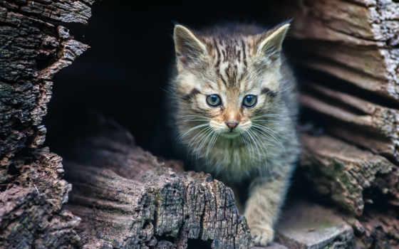 peep, ebay, котенок, вылезает, kitty, sammeln, seltenes, за, большие, микс,