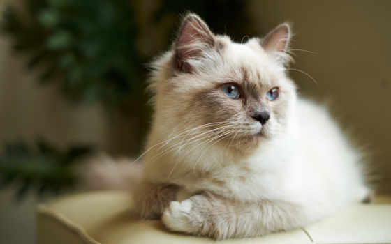 кот, zhivotnye, записи