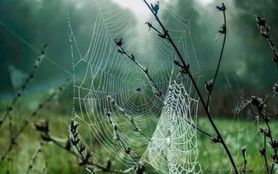 web, макро, капли, роса,
