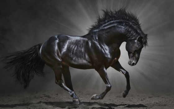 лошадь, animal, грива, running, permission, stallion, run, фотообои, черная