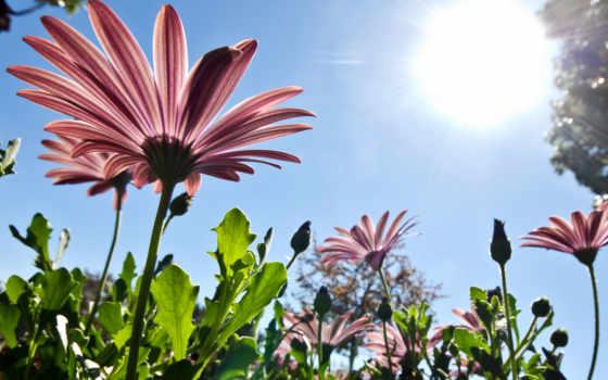 весна, природа, небо