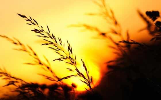 природа, закат, трава