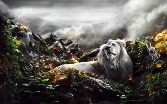 león, леон, selva, blanco, pantalla, descargar, para,