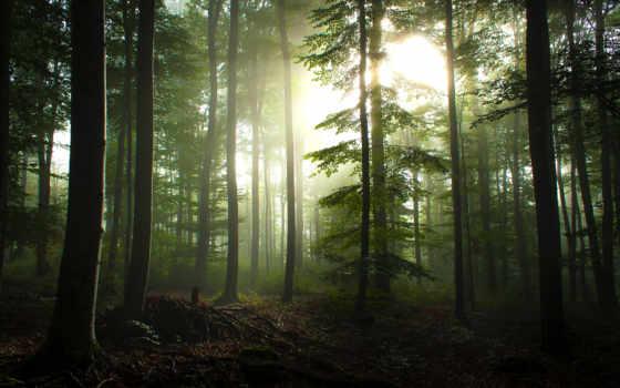 лес, trees, природа, фона, который, click, one, страница, лиственный, солнечные, rays,