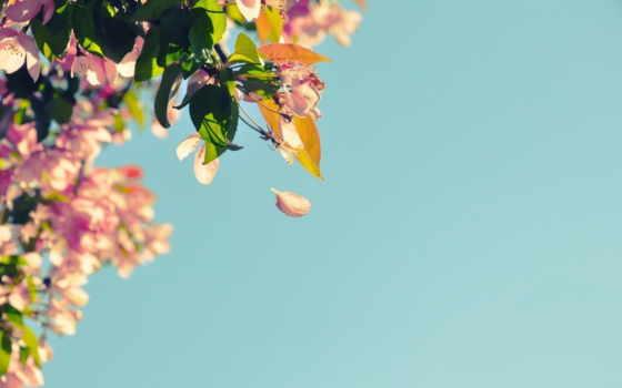 лепестки, природа, растения, цветы, cvety, фон, ветки, favim, bush,