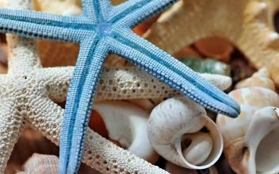 ракушки, star, морская, макро, морские,,