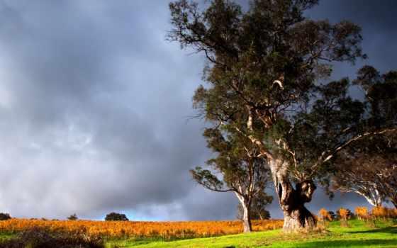 тучи, трава, trees, грозовые, природа, осень, небо, пейзажи -, зелёная, есть, android,