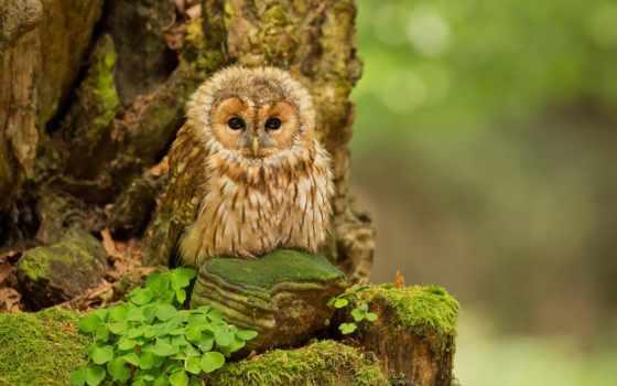 совы, сова, милые, смешные, красивые, потрясающие, существа,