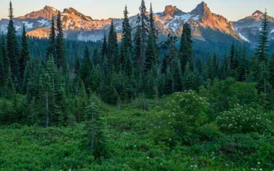 леса, горы, лес, природа, коллекциях, сша, яndex, ёль, фотографий, штаты, трава,