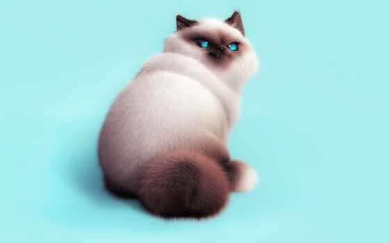кот, рисованный, эмоции, narrow, хороший, dimension, оксана, небо, волосы, мяу