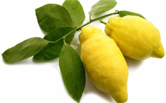 lemon, натюрморт, fat, напиток, burn, плод, акпп, publication, article, другой