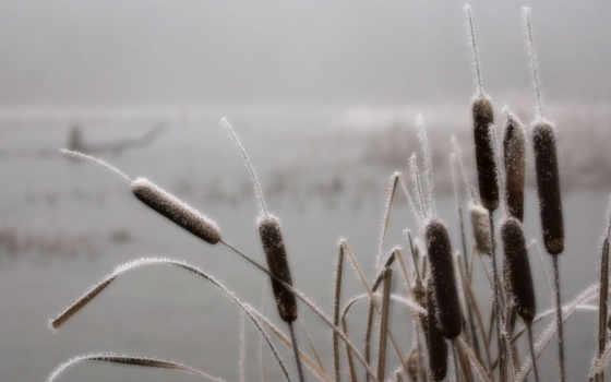,камыши, природа, зима, река, иней, камыш, трава, снег, frosted, priroda,