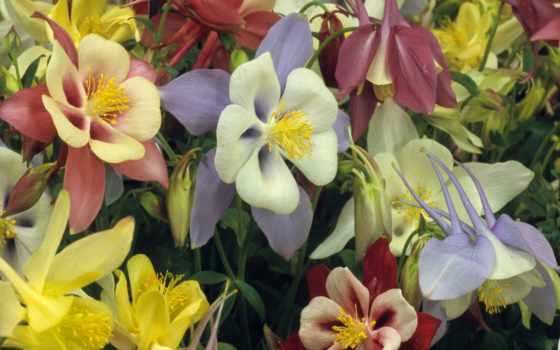 amazing, цветы, desktop