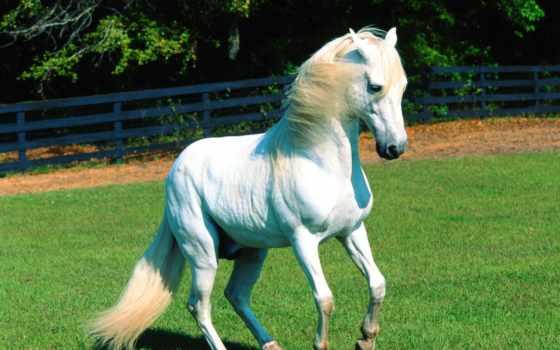 лошади, лошадь, животных