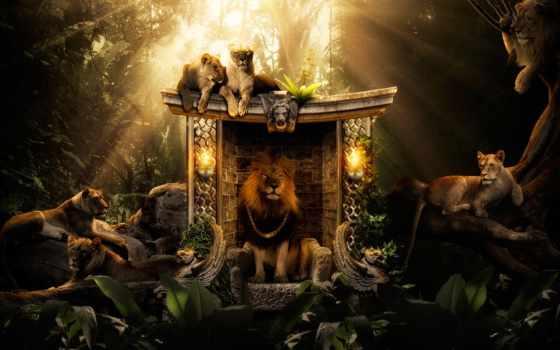 lion, king, зверей