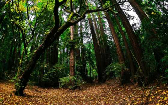 fisheye, лес, осень, природа, free, объектив, лирическое,
