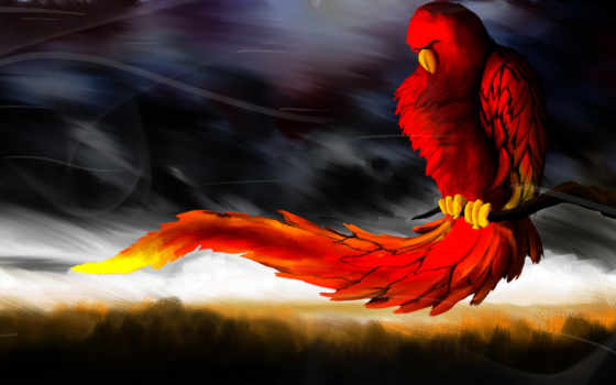 deviantart, zhivotnye, птицы, попугаи, art, попугай, птица, wolffireclan,