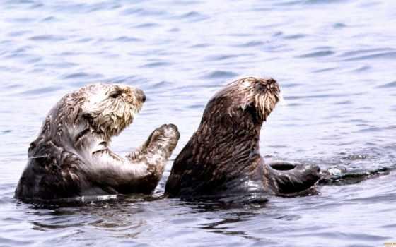 por, animals, animal, praying, otters,